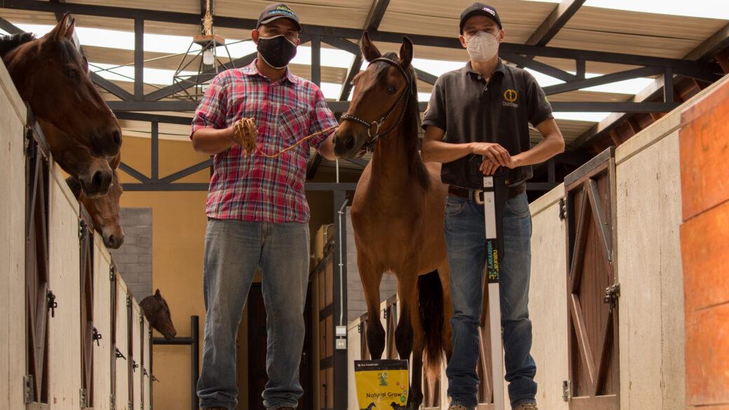Beneficios de la suplementación en los caballos